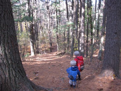 Harvey and Zion hiking down a sloping path in the pines