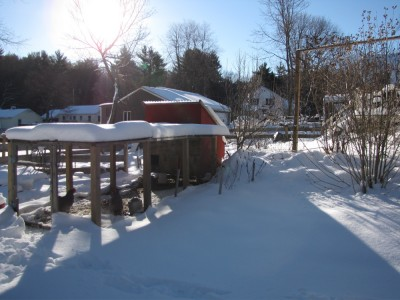 morning sun on the snowy chicken coop