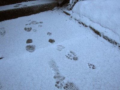 footprints in a quarter-inch of snow