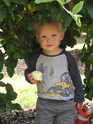 Lijah holding an apple and water bottle and looking cute under an apple tree