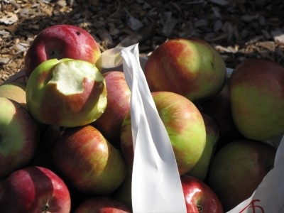 a full half-peck bag of apples, with a half-eaten one on top