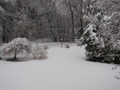 a snowy spring morning in our yard