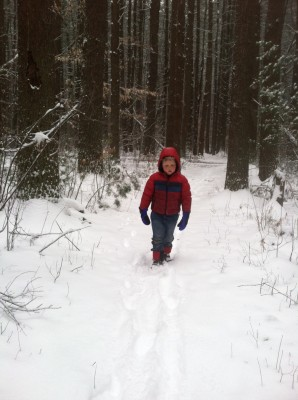 Harvey walking in the snowy woods