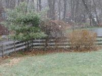 snow falling the yard