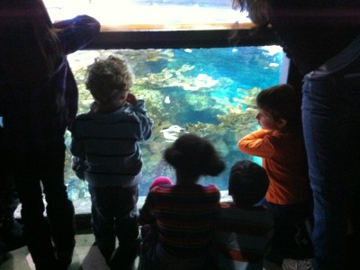 Harvey and friends at the top of the big aquarium tank