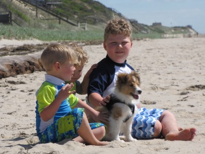 the boys sitting on the beach with puppy Tovi