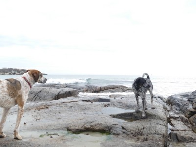 the dogs standing on the rocks by the ocean