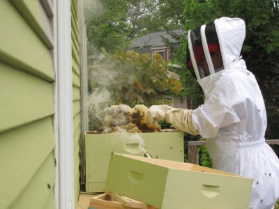 Leah in her beekeeping suit removing messed-up comb from the hive