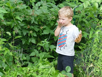 Lijah picking black raspberries to eat