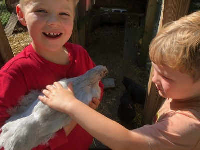 Zion holding one of the young hens as Lijah pets her