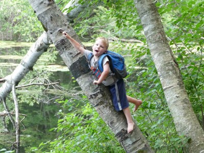 Lijah climbing up a birch tree furnished with spikes for a ladder