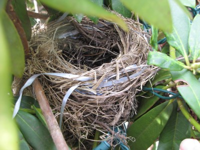 a ribbon-bedecked birds' nest