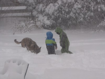 Harvey, Zion, and Rascal out in the yard in deep snow, with lots more falling