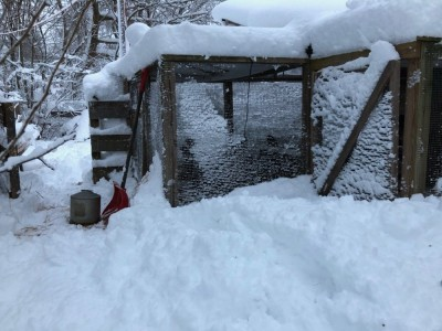 the chicken coop under lots of snow