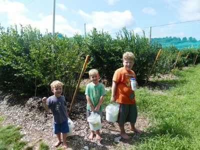 the boys holding their full(ish) buckets in front of the blueberry bushes
