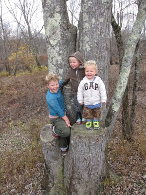 all three boys up in a tree