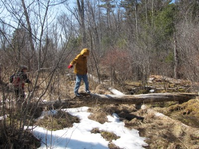 Bruce crossing a log above a boggy spot