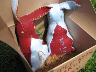 closeup of bunnies in box