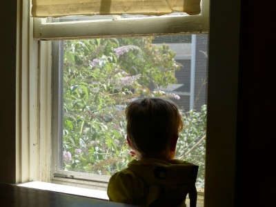Lijah watching butterflies out the kitchen window