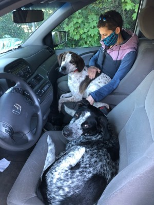Blue in the driver's seat of the van, Scout in the passenger seat with Leah