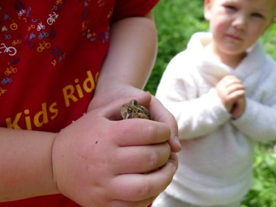 Harvey's hands holding a toad, Lijah looking on
