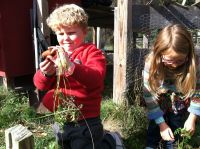 Harvey and Taya pulling carrots