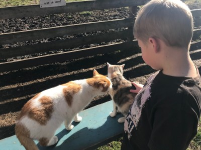 Zion petting cats at a farm