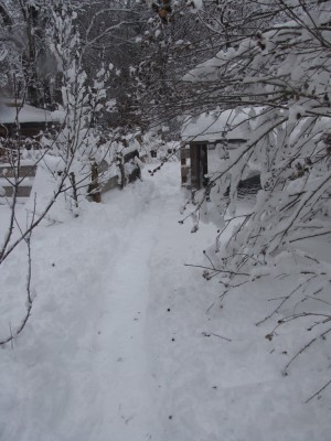 the snowy path to the chicken coop