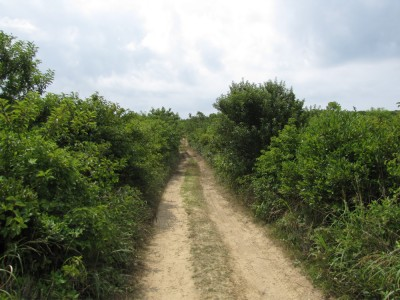 a dirt track through the scrub