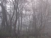 the backyard trees through the mist