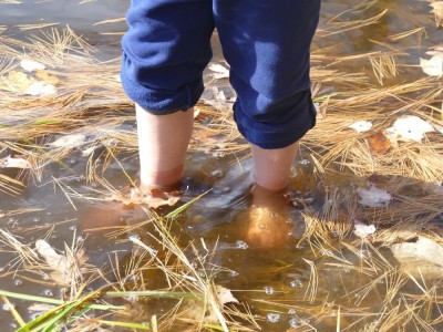 Zion's feet wading in a pond among floating leaves and pine needles