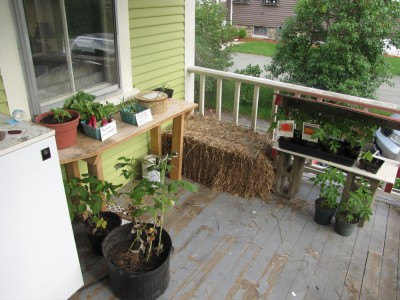 the farm stand on the porch with tomato plants, radishes, garlic scapes, and cookies