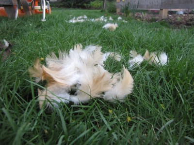 some feathers on the grass