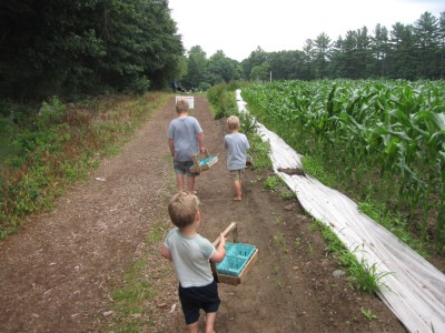 the boys walking to the strawberry fields holding their baskets