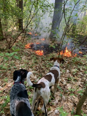 the dogs looking at a little forest fire