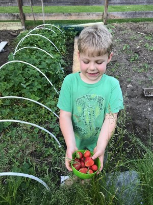 Zion holding a bowl of strawberries in the garden