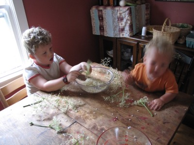 Harvey and Elijah stripping elderflower clusters