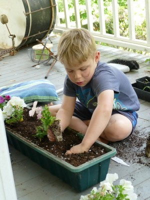Zion planting petunias in a flower box