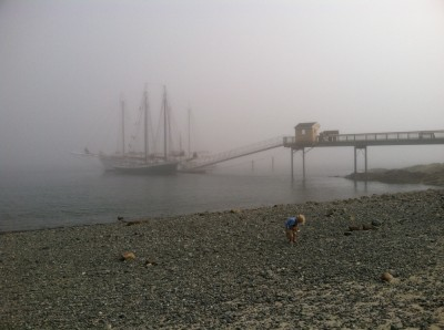 Zion picking up rocks on the foggy beach, docked schooners in the background