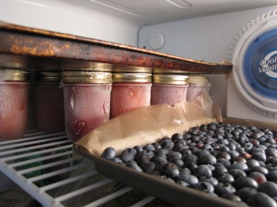 blueberries in the freezer