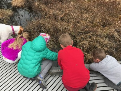 Zion, Lijah, Piper, Finley, and Roca looking over the edge of a boardwalk into a bog