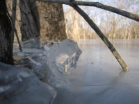 ice around a tree trunk