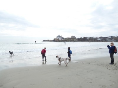 the boys and dogs near the water at Good Harbor beach