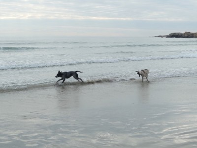 the dogs running in the waves
