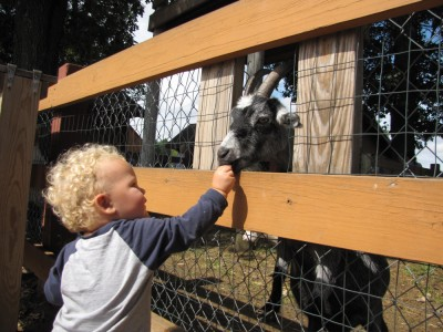 Lijah feeding a goat one pellet of feed