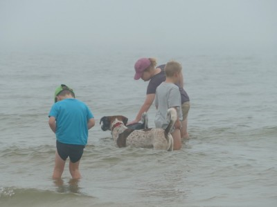 the boys and dogs wading in the ocean in the fog