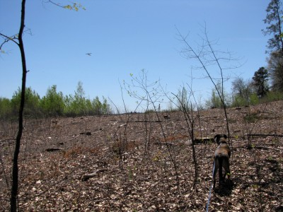 deforestation around Hanscom Field