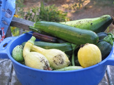 summer squashes in a blue colander