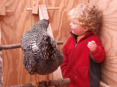 harvey talking to a chicken