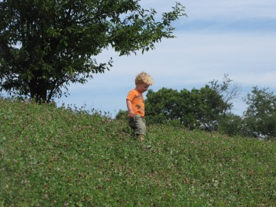Harvey walking down a clover-covered hill